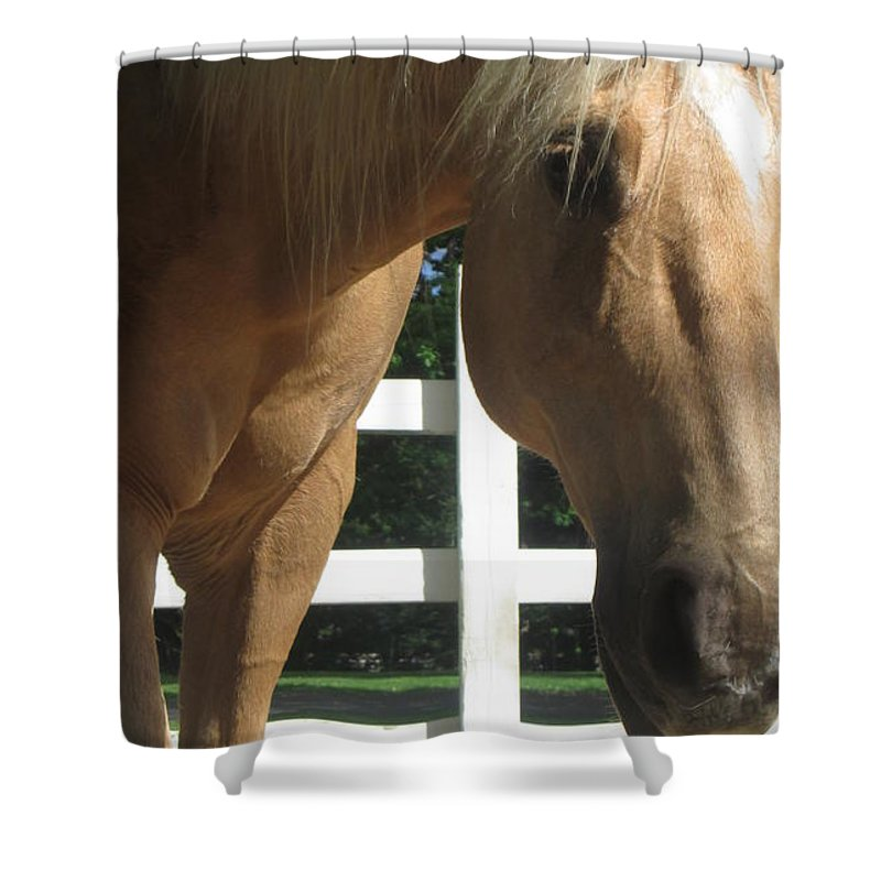 Horse Shower Curtain featuring the photograph Palimino Pal by Julie Houle