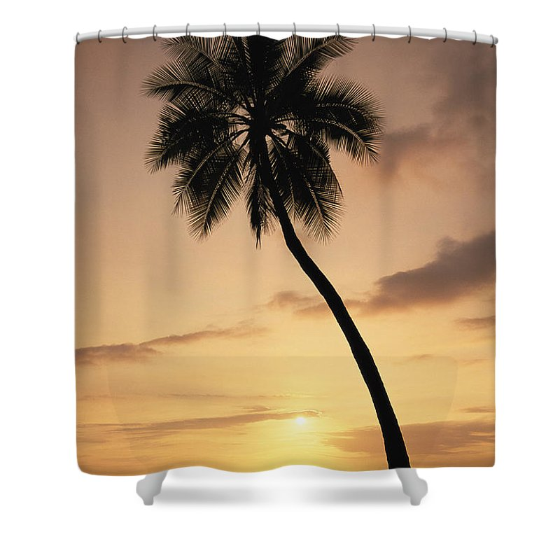 Afternoon Shower Curtain featuring the photograph Palm At Sunset by Greg Vaughn - Printscapes