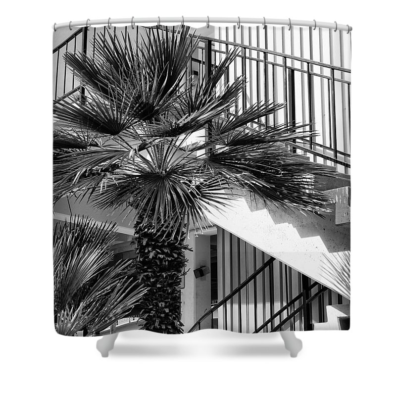 Palm Shower Curtain featuring the photograph Palm Chevron Palm Springs by William Dey
