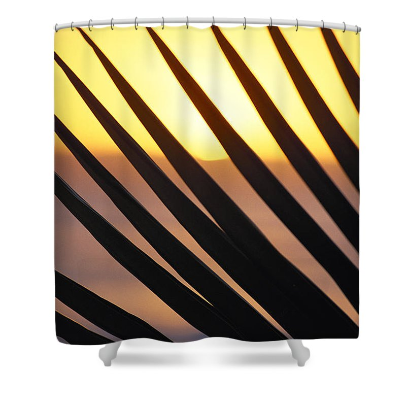 Amaze Shower Curtain featuring the photograph Palm Frond Detail by Bill Schildge - Printscapes