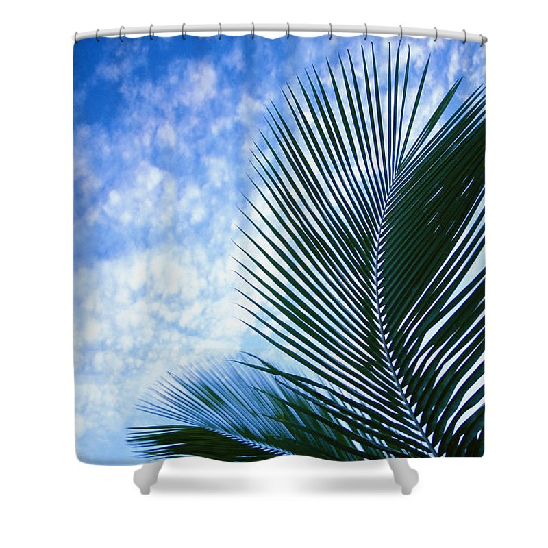 Afternoon Shower Curtain featuring the photograph Palm Fronds And Clouds by Dana Edmunds - Printscapes