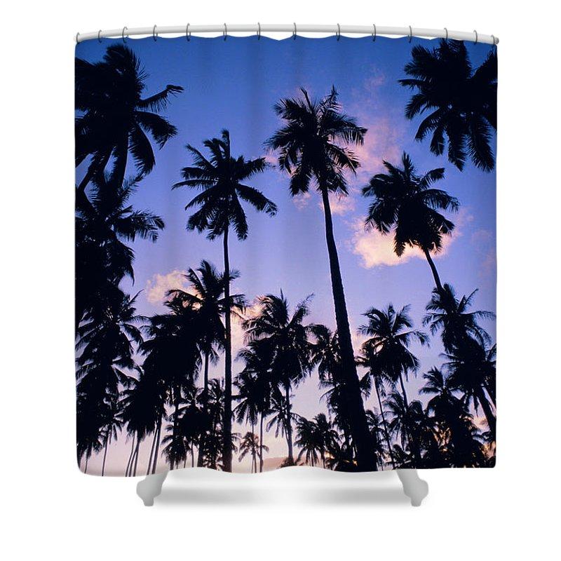 Allan Seiden Shower Curtain featuring the photograph Palm Grove by Allan Seiden - Printscapes