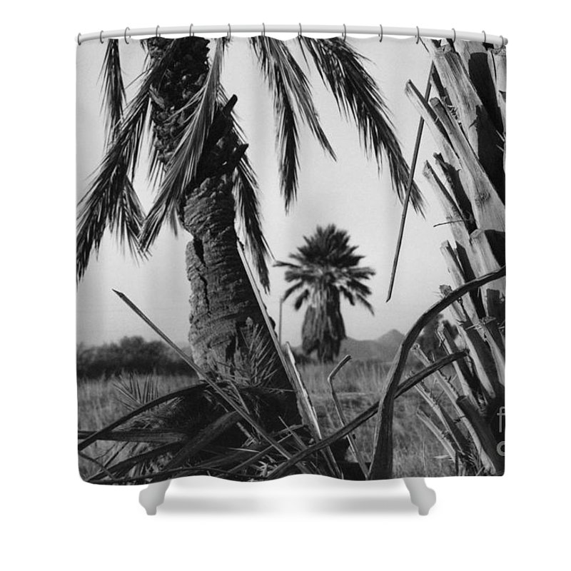 Black And White Photograpy Shower Curtain featuring the photograph Palm In View Bw Horizontal by Heather Kirk