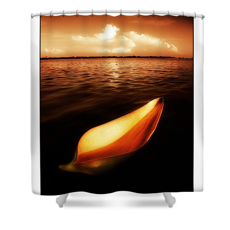 Palm Shower Curtain featuring the photograph Palm Leaf Sheath Boat by Mal Bray