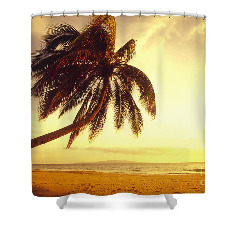 66-csm0125 Shower Curtain featuring the photograph Palm Over The Beach by Ron Dahlquist - Printscapes