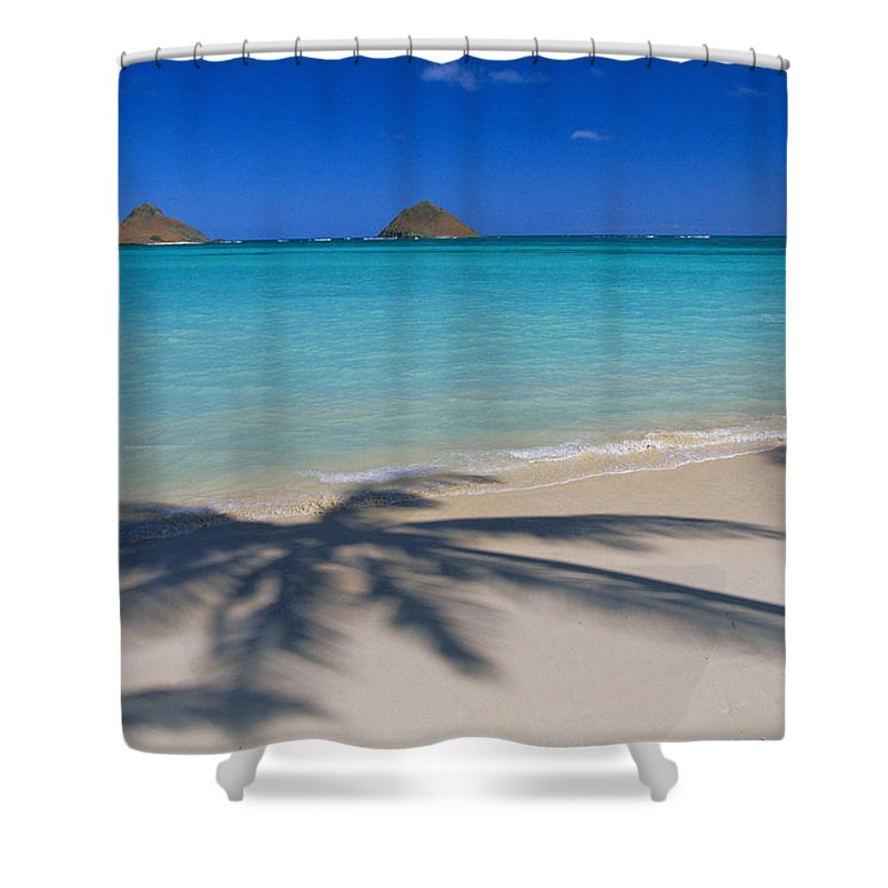 Afternoon Shower Curtain featuring the photograph Palm Shadows by Dana Edmunds - Printscapes