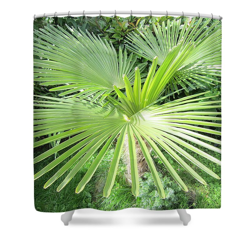 Palm Tree Shower Curtain featuring the photograph Palm Tree by Clive Howe
