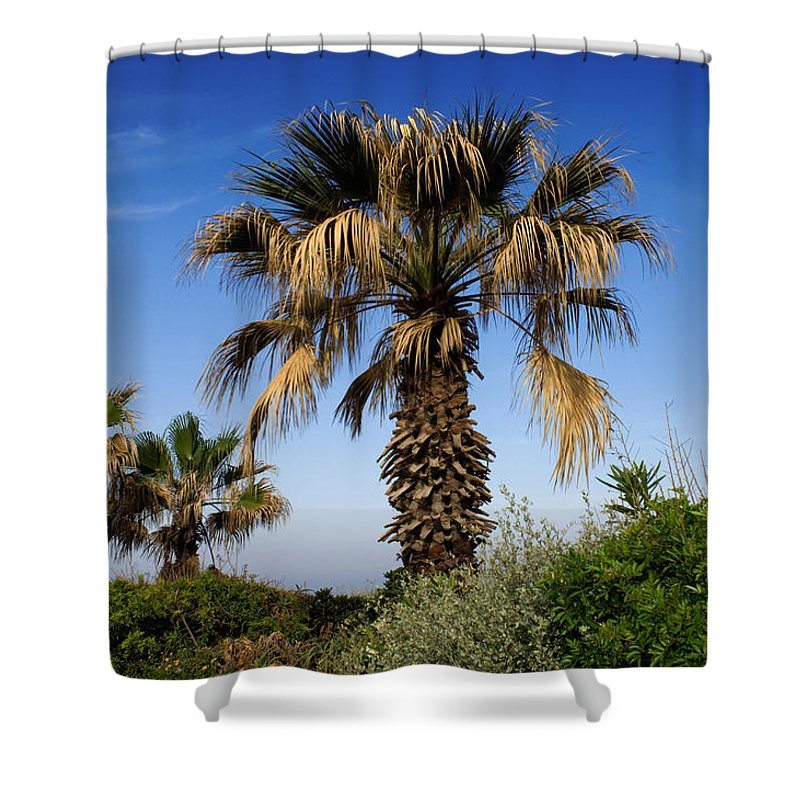 Blue Shower Curtain featuring the photograph Palm Trees Growing Along The Beach by Keenpress