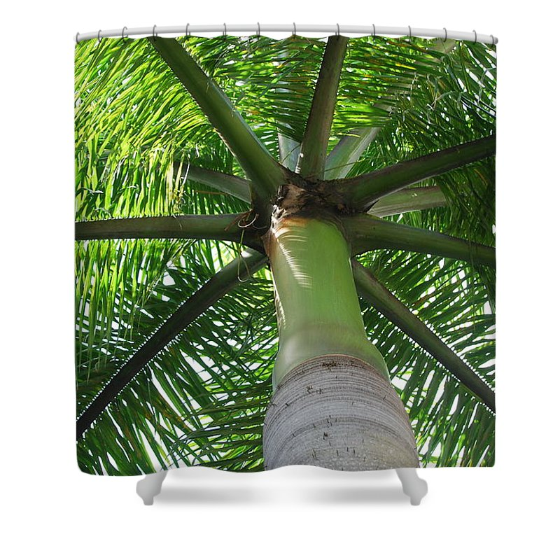 Macro Shower Curtain featuring the photograph Palm Unbrella by Rob Hans