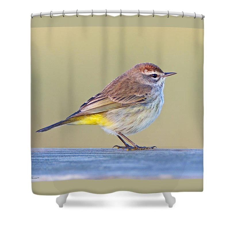 Palm Warbler Shower Curtain featuring the photograph Palm Warbler by John Harmon
