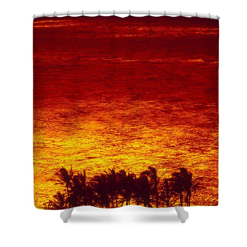Bright Shower Curtain featuring the photograph Palms And Reflections by Ron Dahlquist - Printscapes