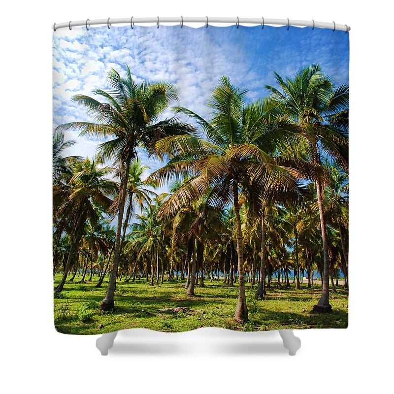 Palms Shower Curtain featuring the photograph Palms And Sky by Galeria Trompiz