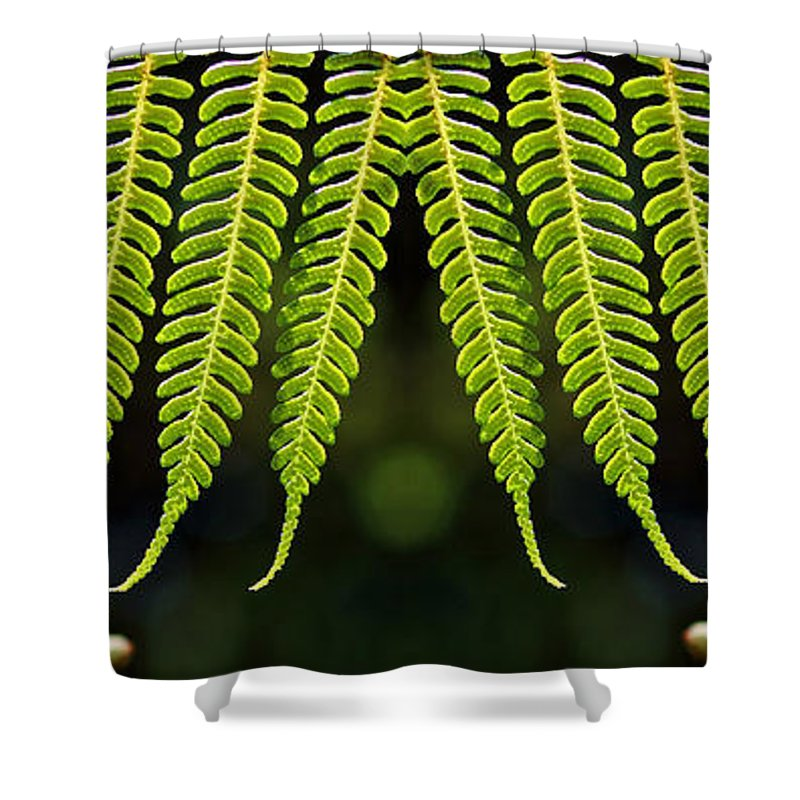 Veil Of Ferns Shower Curtain featuring the photograph Panoramic Veil Of Ferns by Daniel Unfried