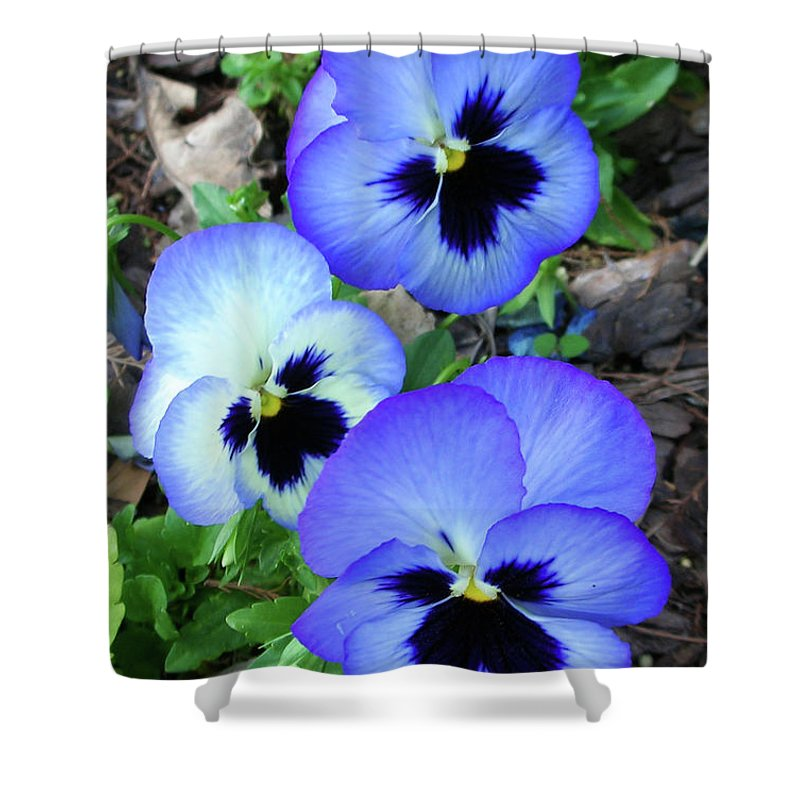 Flowers Shower Curtain featuring the photograph Pansies 0823 by Guy Whiteley