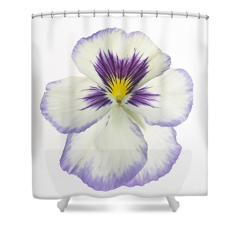 Pansy Genus Viola Shower Curtain featuring the photograph Pansy 2 by Tony Cordoza