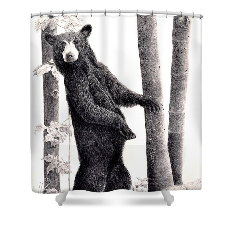 Black Bear Shower Curtain Featuring The Drawing Paparazzi In Beechnut Grove By Susan