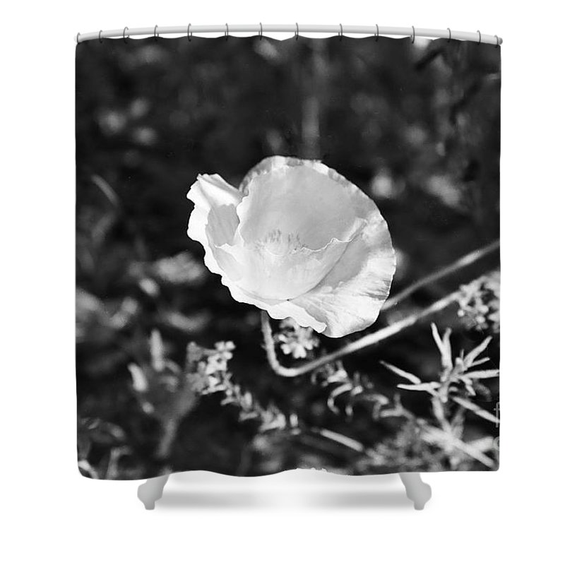 Flowers Shower Curtain featuring the photograph Paper Flower In B And W by Kathy McClure