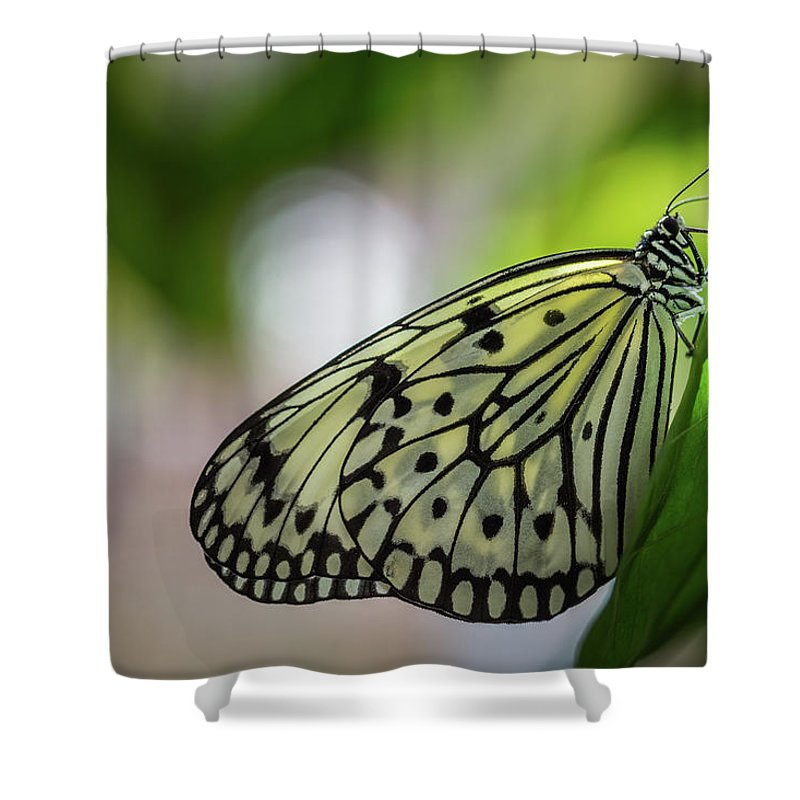 Paper Kite Butterfly Shower Curtain featuring the photograph Paper Kite Butterfly- 2 by Calazone's Flics