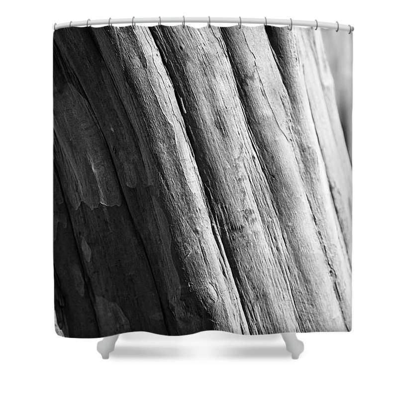 Tree Shower Curtain featuring the photograph Paper by Lara Morrison