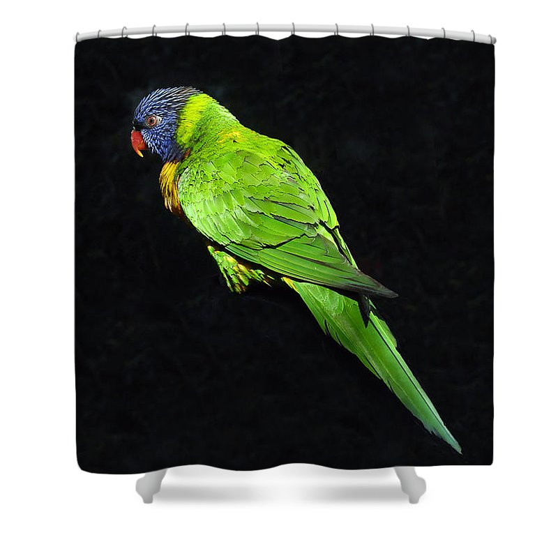 Parrot Shower Curtain featuring the photograph Parrot In Black by David Lee Thompson