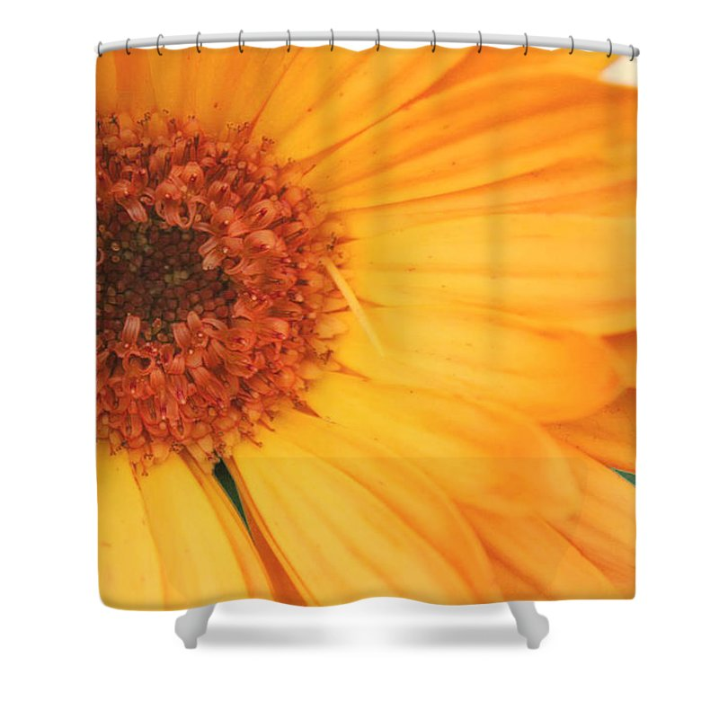 Flowers Shower Curtain featuring the photograph Partly Sunny by Linda Sannuti