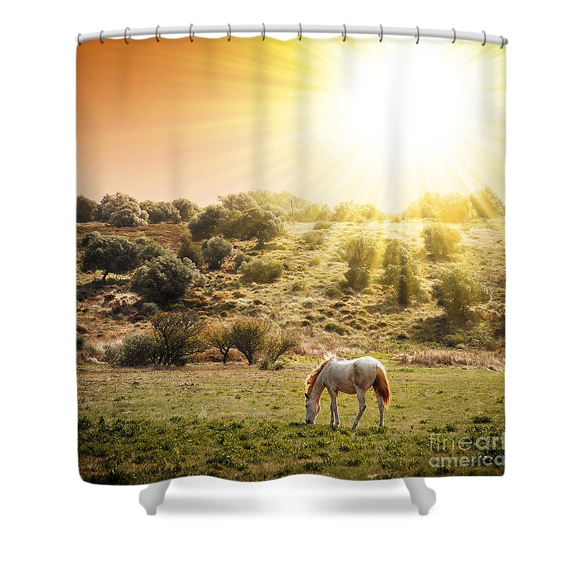 Animal Shower Curtain featuring the photograph Pasturing Horse by Carlos Caetano