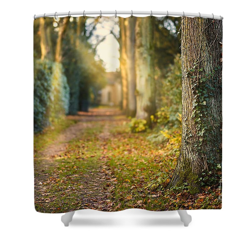 Path Shower Curtain featuring the photograph Path Into The Light by Daniel Heine