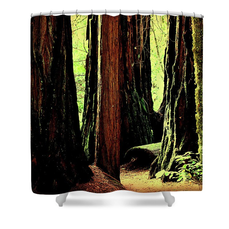 Tree Shower Curtain featuring the photograph Path Through The Forest Edge . 7d5432 by Wingsdomain Art and Photography
