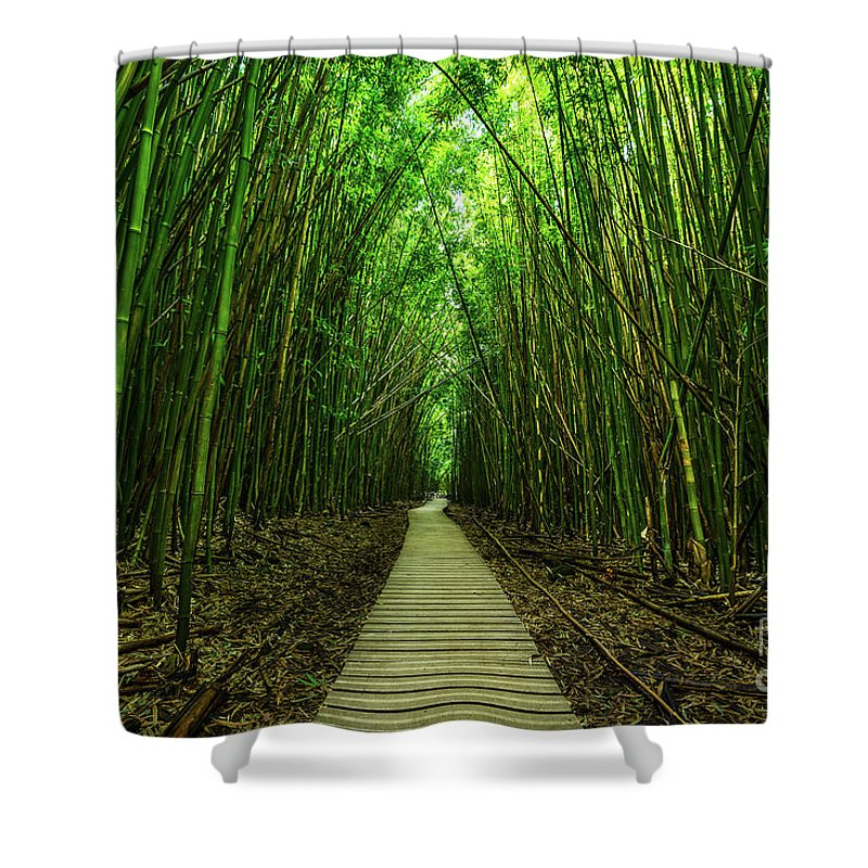Bamboo Forest Shower Curtain Featuring The Photograph Path To Zen By Jamie Pham