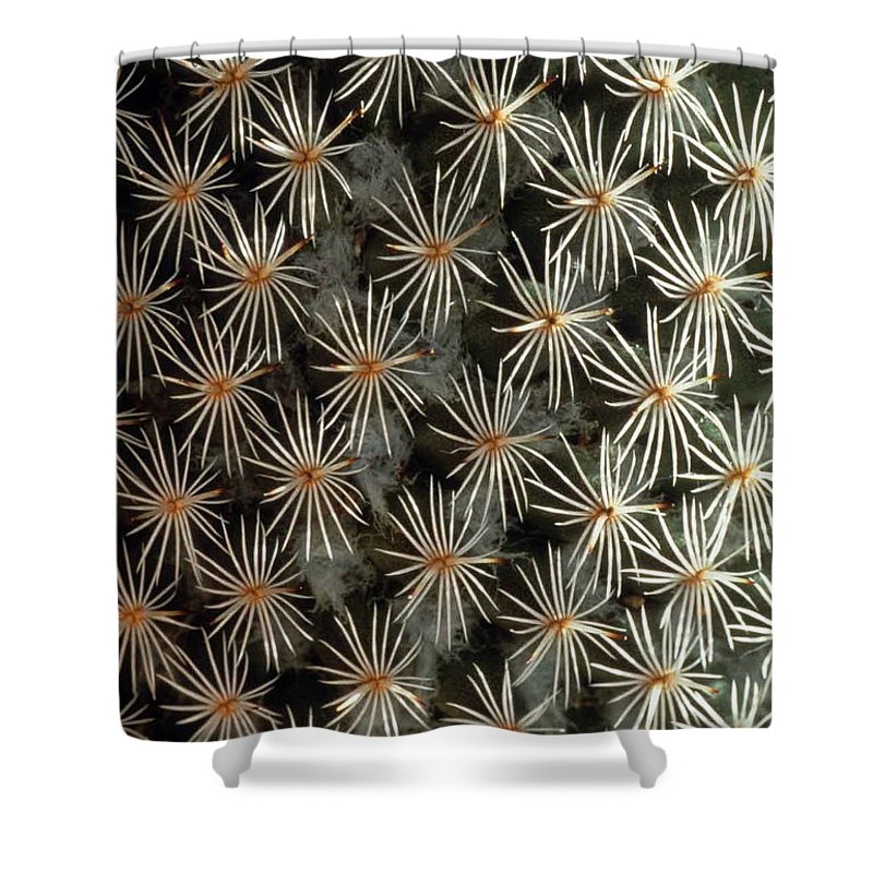 Cactus Shower Curtain featuring the photograph Patterns In Light And Dark by Laurie Paci