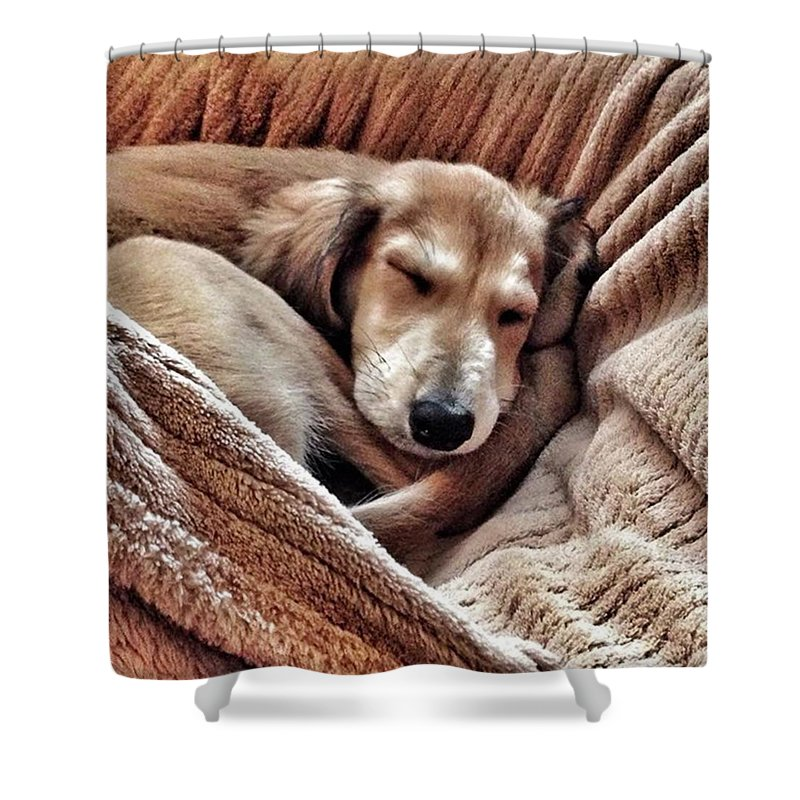 Persiangreyhound Shower Curtain featuring the photograph Peace At Last #saluki by John Edwards