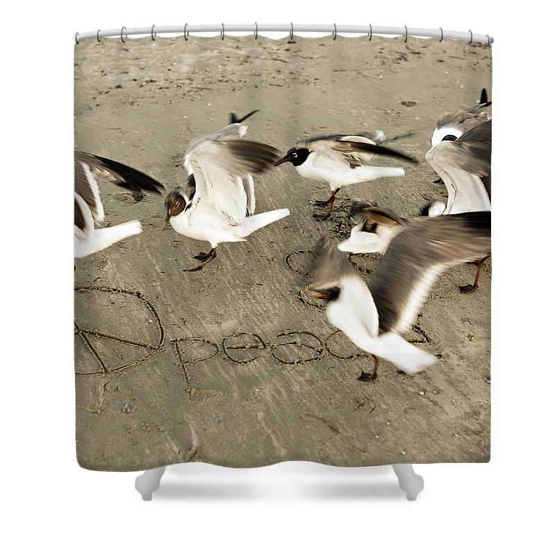Bird Shower Curtain featuring the photograph Peace Dance by Marilyn Hunt