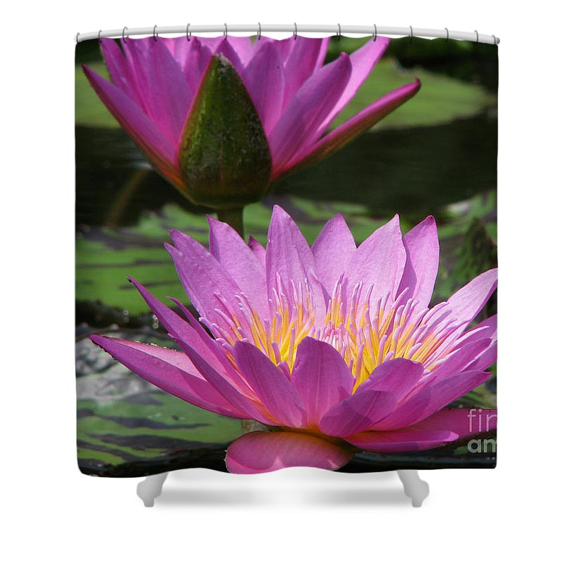 Lillypad Shower Curtain featuring the photograph Peaceful by Amanda Barcon