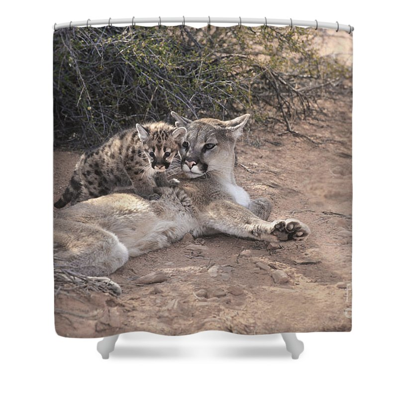 Animals Shower Curtain featuring the photograph Peaceful Moments by Sandra Bronstein