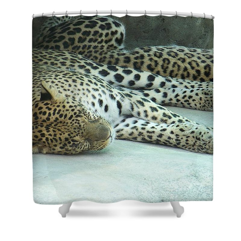 Chetah Shower Curtain featuring the photograph Peaceful Sleep by Laurie Paci