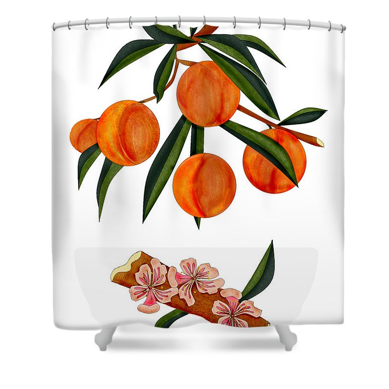 Peaches Shower Curtain featuring the painting Peach And Peach Blossoms by Anne Norskog