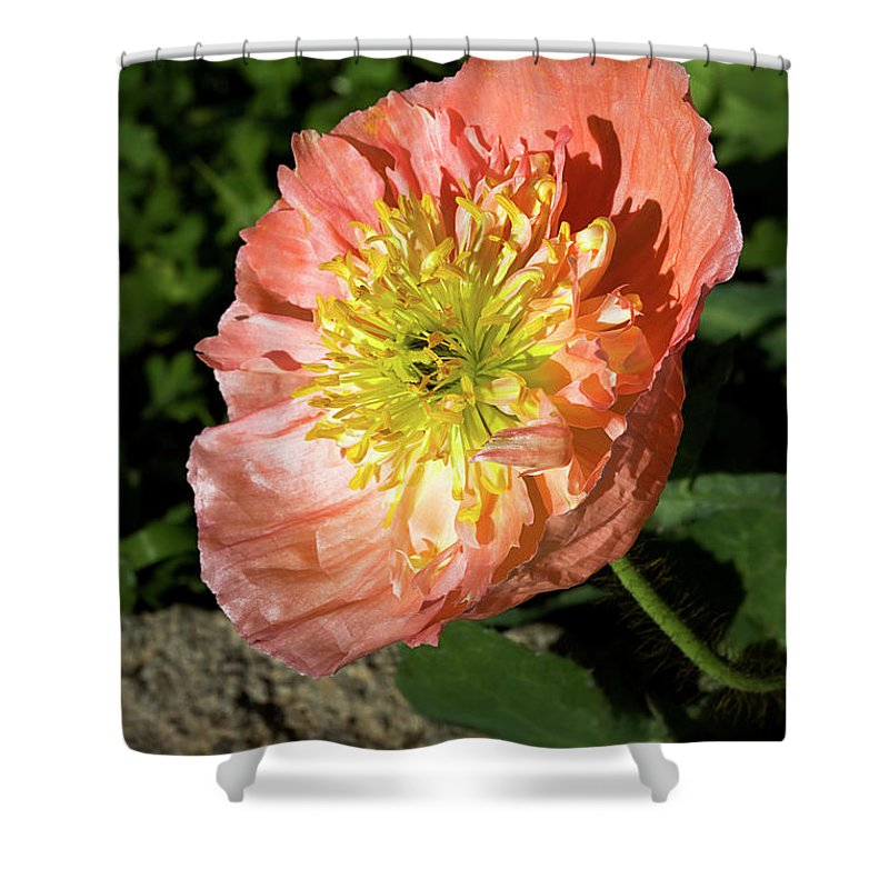 Poppy Shower Curtain featuring the photograph Peach Colored Poppy by Phyllis Denton