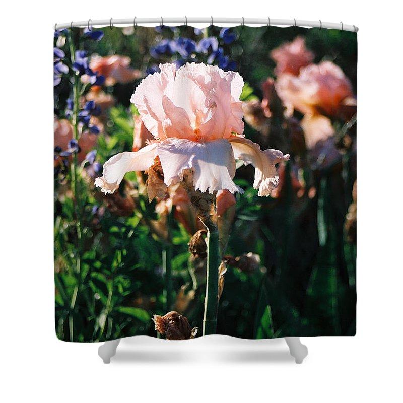 Flower Shower Curtain featuring the photograph Peach Iris by Steve Karol