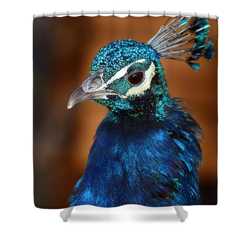 Peacock Shower Curtain featuring the photograph Peacock by Anthony Jones