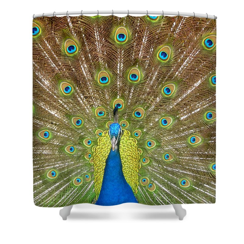 Peacock Shower Curtain featuring the photograph Peacock by David Lee Thompson