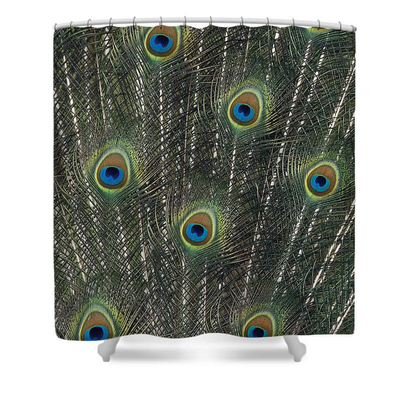 Animal Art Shower Curtain featuring the photograph Peacock Feathers by Greg Vaughn - Printscapes