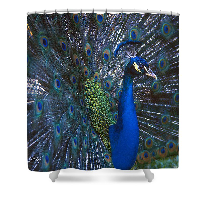 Peacock Shower Curtain featuring the photograph Peacock Splendor by Marie Hicks