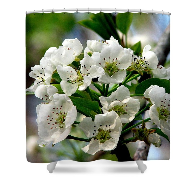 Pear Tree Blossum Shower Curtain featuring the photograph Pear Tree Blossoms 1 by J M Farris Photography