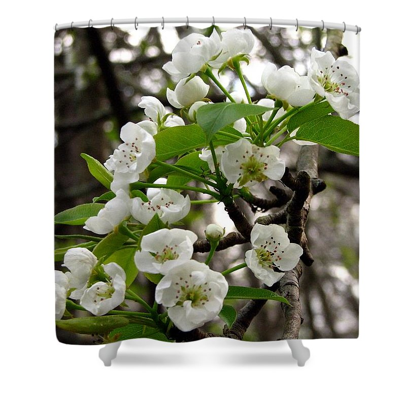 Pear Tree Blossum Shower Curtain featuring the photograph Pear Tree Blossoms 2 by J M Farris Photography