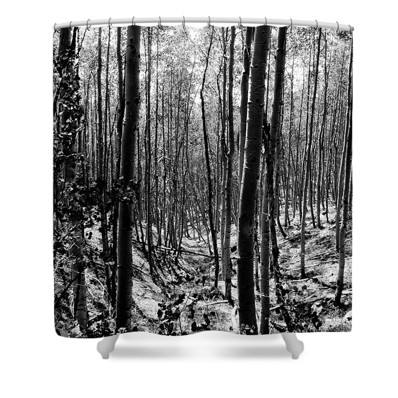 Pecos National Forest Shower Curtain featuring the photograph Pecos Wilderness by David Lee Thompson