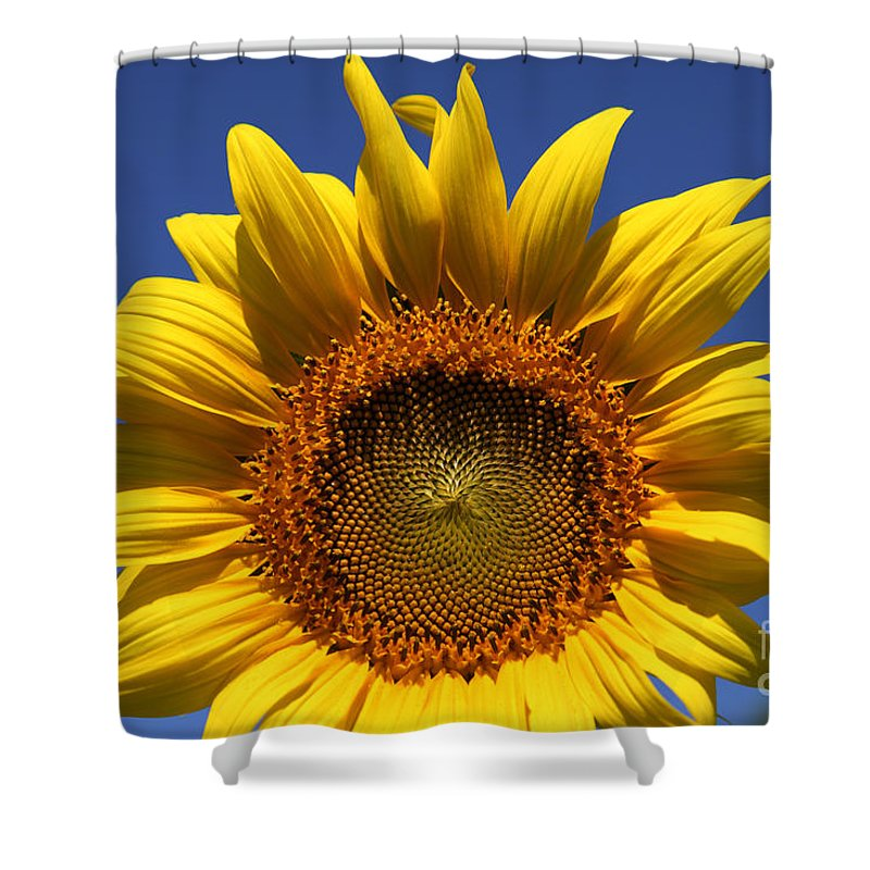 Sunflowers Shower Curtain featuring the photograph Peek A Boo by Amanda Barcon