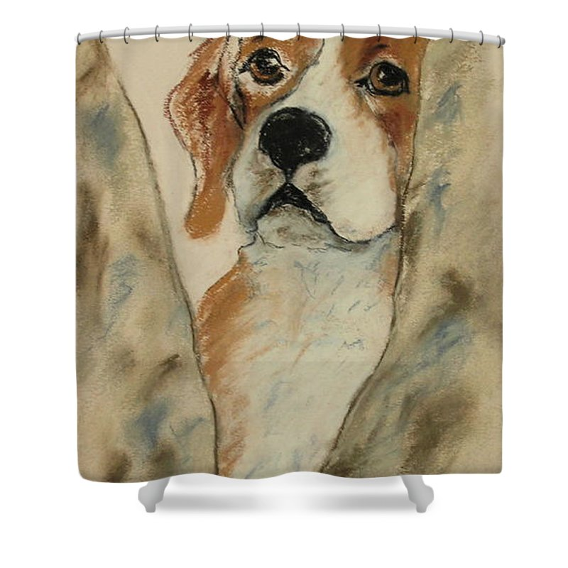 Beagle Shower Curtain featuring the drawing Peek A Boo by Cori Solomon
