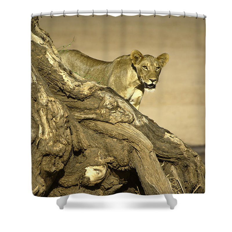 Africa Shower Curtain featuring the photograph Peeking Out by Michele Burgess