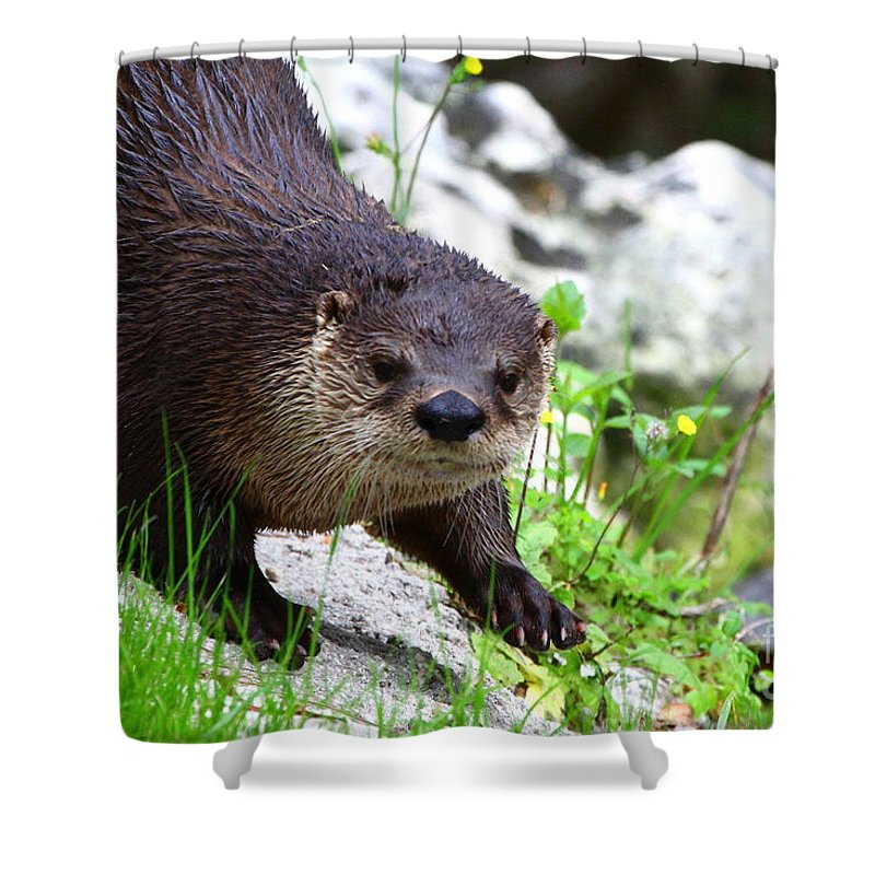 Otter Shower Curtain featuring the photograph Peering Otter by Barbara Bowen