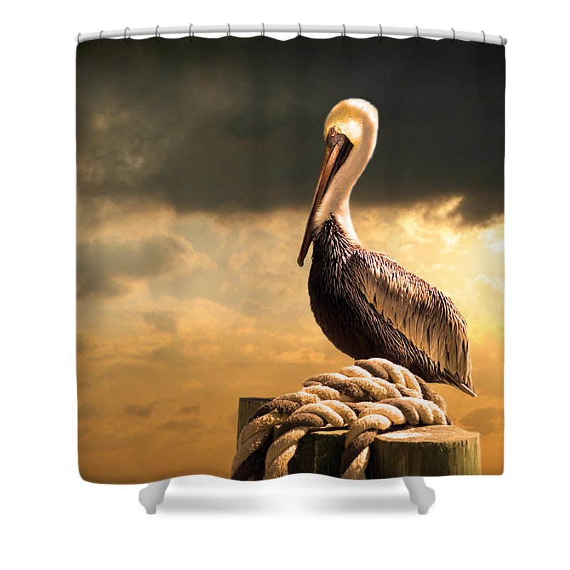 Pelican Shower Curtain featuring the photograph Pelican After A Storm by Mal Bray